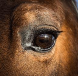 Führung_mit_Pferden