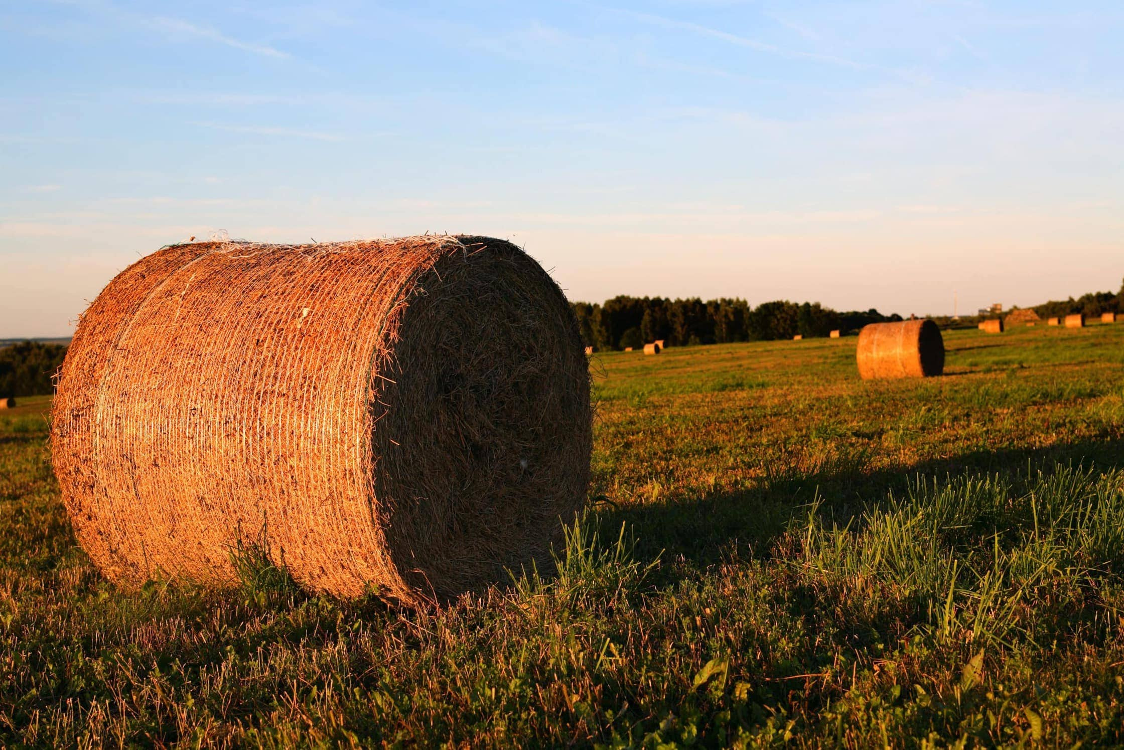 Agricultural Bankruptcy Attorney