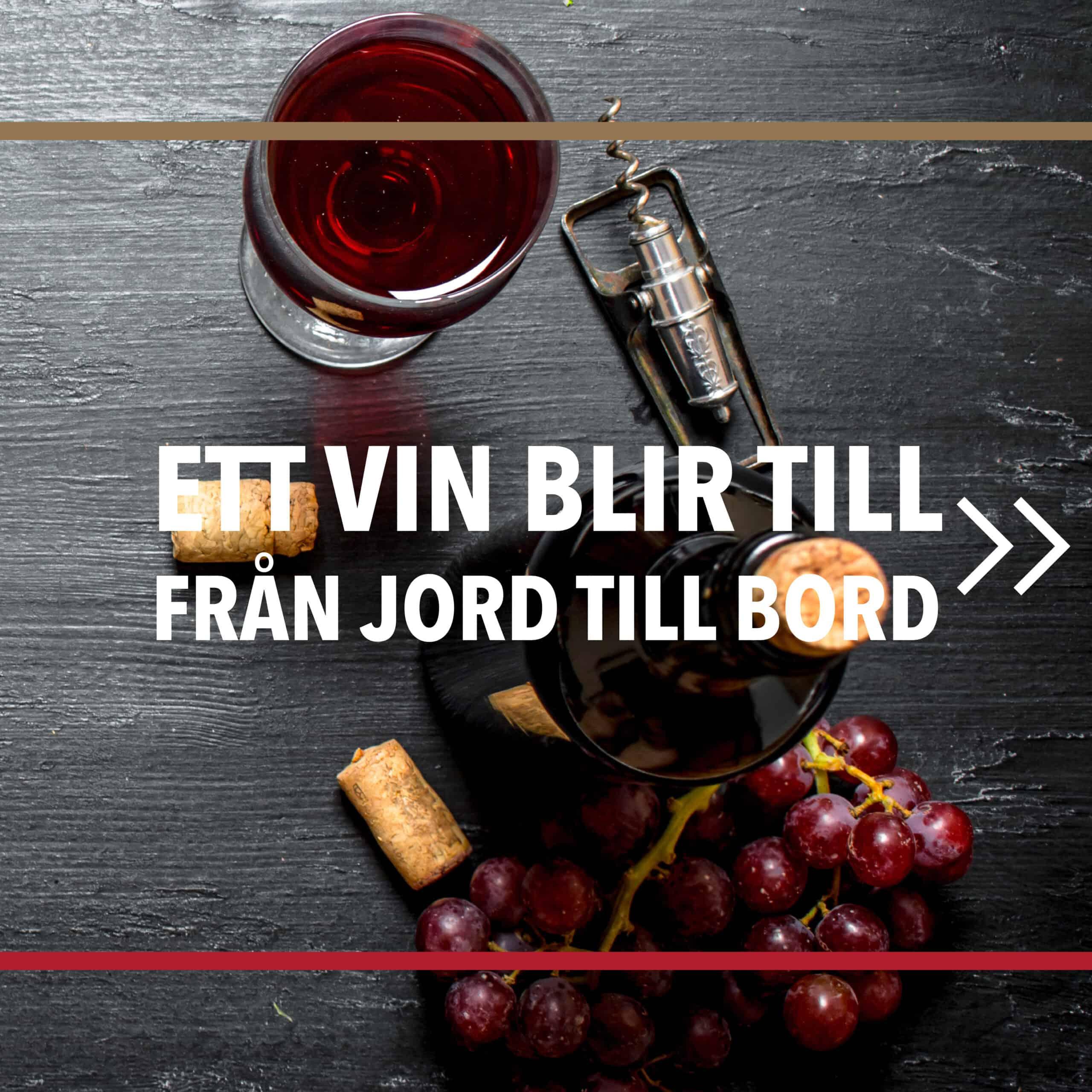 Vintillverkning: Hur ett vin blir till – från jord till bord