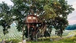 casa sull'albero 2020