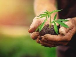 Attorney General of North Carolina Calls For Decriminalizing Cannabis