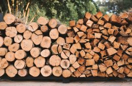 A Guide to the Best Trees for Firewood