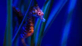 Image: sea horse peering out from branches