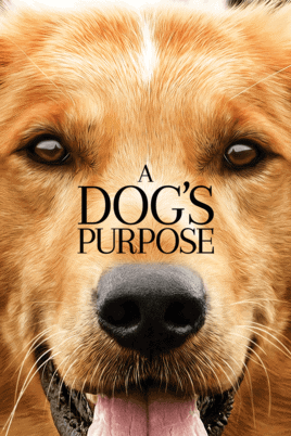 a dogs purpose has to be one of our all time fav movies about dogs
