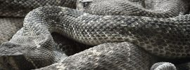 Facts about Satan and his schemes: a den of rattlesnakes