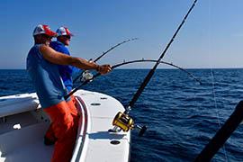 Fishing for Tuna and Shark