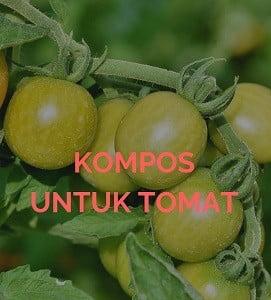Pupuk untuk tomat tumbnail