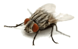 cluster flies exterminators
