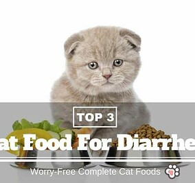Best Cat Foods For Diarrhea