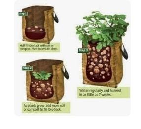 Potatoes gradually filling bag