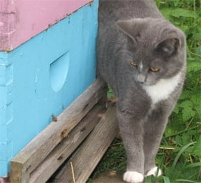 Cat Near a Beehive