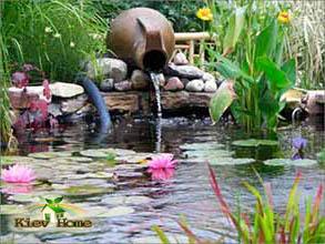 Растущие кувшинки в построенном пруде