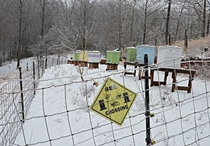 Cold emergency winter feeding is important for bees. Carolilna Honeybees