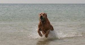 Normandië met hond