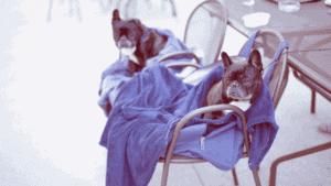 Dog De-SKUNK: The 1-Time Method