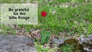 be grateful for the little things
