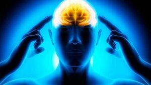 le principe de fonctionnement des connexions cerveau et muscles