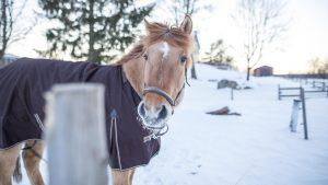 Südschweden - Werbefotograf Tobias Kramer