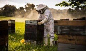Top 3 Best Beekeeping Gloves That Offer You Maximum Sting Protection