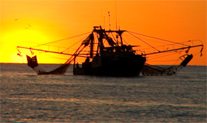 Australian Prawn Fisheries