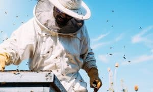 Top 10 Best Beekeeping Suits That Keep You Safe and Comfortable