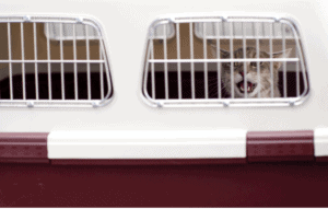 hard cat carrier