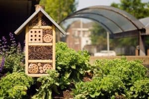 8 Best Mason Bee Houses That Professional Beekeepers Swear By