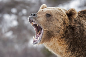 bitcoin price bears roaring