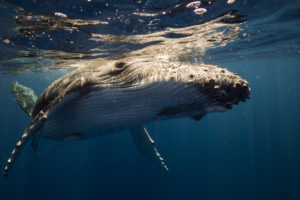bitcoin crashes as whale dumps on Huobi