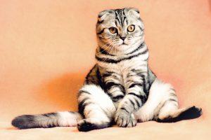 Image of a cat sitting like a human