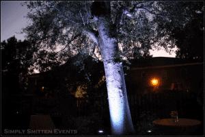 outdoor tree lighting event wilmington uplighting