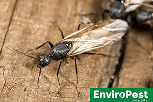 ithaca pest control