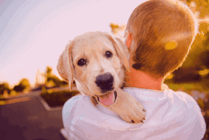 Low Blood Sugar In Puppies: Info & Home Remedies