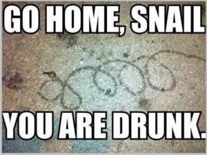 bar humor-go home snail