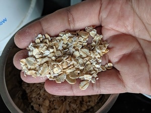 Rolled Oats and Instant Oats for Oats Chilla
