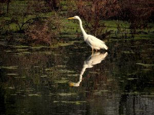 keoladeo national park is famous for which animal