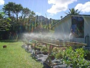 Backyard irrigation plants