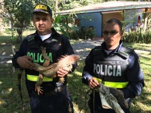 Iguanas decomisadas por La Policía de Costa Rica