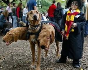 Fluffy the Three-Headed Dog