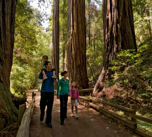 Family hiking in a redwood park