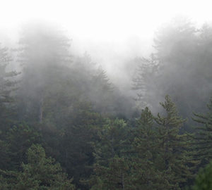 A new way to track clouds over space and time could be a valuable tool in researching water availability in redwood forests, which rely on fog. Photo by Stephen Sillett