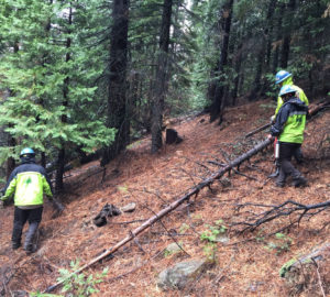 Thinning work in the redwoods