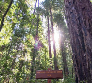 Members Centennial Grove 2018 is in the League-owned Peters Creek Old-Growth Forest next to Portola Redwoods State Park. Photo by Jennifer Verhines