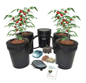 Hydroponic Recirculating Deep Water Culture System with Root Spa