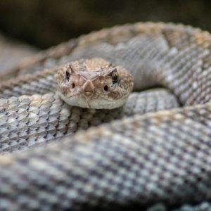 Had v terarijní expozici ZOO Plzeň