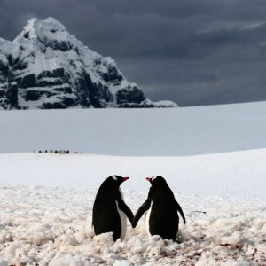 Couples Therapy Penguins