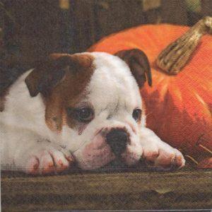 chien et automne
