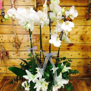 Dört Dallı Beyaz Orkide