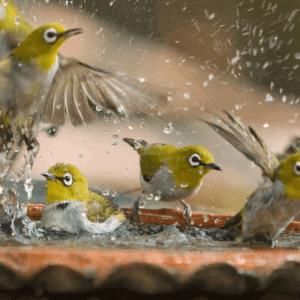Attract more garden birds to your birdbath with these 6 easy tips