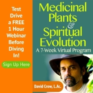 How Medicinal Plants Can Fuel Your Spiritual Evolution: Essential Insights that Unify Natural Medicine, Ecology & Spirituality.